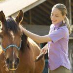 Paardenverzorging